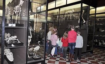 Экскурсии для школьников в Зоологический музей МГУ