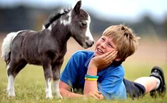 школьные экскурсии к мини-лошадям