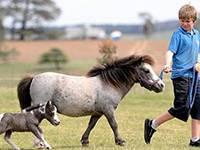 экскурсии для детей на ферму мини-лошадей