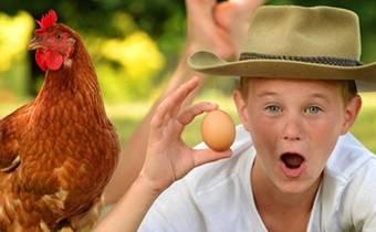 школьные экскурсии в гости к фермеру