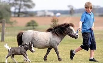 экскурсии для школьников на ферму мини-лошадей