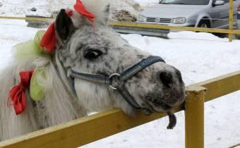 Мини-лошадки