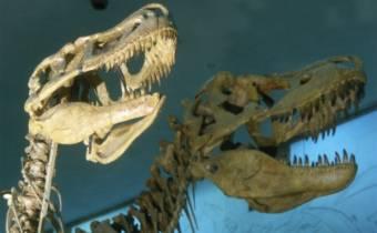dinozavry-i-ix-vremya