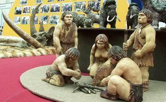 razvitie-mlekopit-primatov-i-cheloveka