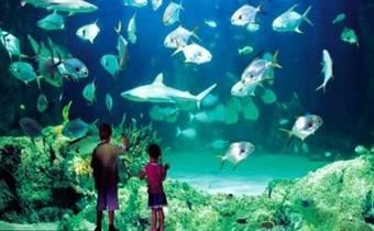 Океанариум Крокус-Сити